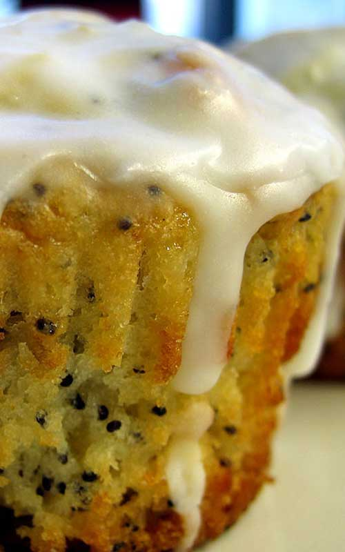 Recipe for Lemon Poppyseed Muffins - I like poppy seeds. I like lemony baked goods. And I love icing! Put those three elements together and bake them into cute little muffins and you'll win my heart!